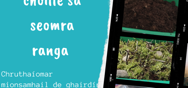 Turgnamh – Mionsamhail de ghairdín choille